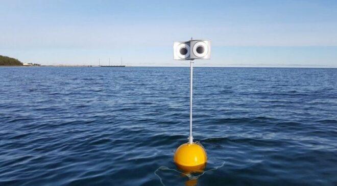 Στην Εσθονία δημιούργησαν το πρώτο πλωτό σκιάχτρο με στόχο να μην πιάνονται τα θαλασσοπούλια σε δίχτυα